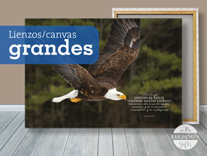 Lienzos, Canvas Grandes